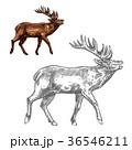 鹿 動物 鹿の角のイラスト 36546211