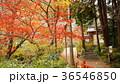 亀岡市神蔵寺 紅葉 36546850