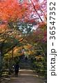 京都浄住寺 紅葉 36547352
