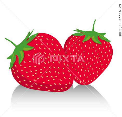 イチゴのイラスト|二粒の苺|フルーツ スイーツ 季節の果物|strawberry 36548129
