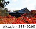 京都 東福寺 秋の写真 36549295