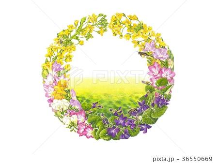 花の輪2月菜の花のイラスト素材 36550669 Pixta