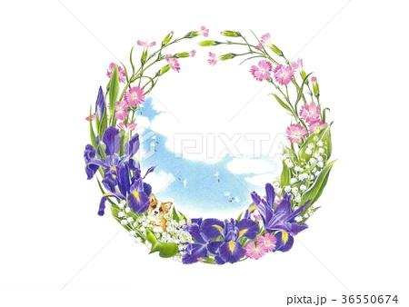 花の輪5月アイリスのイラスト素材 36550674 Pixta