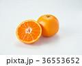 温州みかん みかん フルーツの写真 36553652