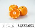 温州みかん みかん フルーツの写真 36553653