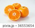 温州みかん みかん フルーツの写真 36553654