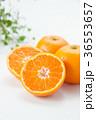 温州みかん みかん フルーツの写真 36553657