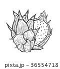 くだもの フルーツ 実のイラスト 36554718