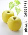 林檎 フルーツ 果物の写真 36554763