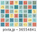 南米大陸 フローラ 植物相のイラスト 36554841