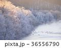 樹氷 ツル タンチョウの写真 36556790