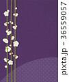 梅 白梅 花のイラスト 36559057