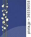 梅 白梅 花のイラスト 36559058