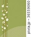 梅 白梅 花のイラスト 36559060