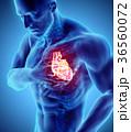 ハート ハートマーク 心臓のイラスト 36560072