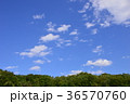 自然 八王子 風景の写真 36570760