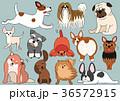 ベクター 犬 犬種のイラスト 36572915