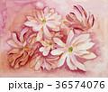モクレン 水彩 手描きのイラスト 36574076