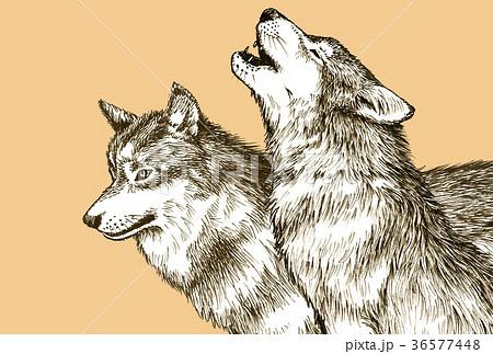 オオカミペン画のイラスト素材 36577448 Pixta