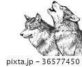 オオカミ_ペン画_コピースペース広め 36577450