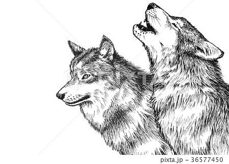 オオカミペン画コピースペース広めのイラスト素材 36577450 Pixta