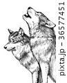 オオカミ_ペン画 36577451