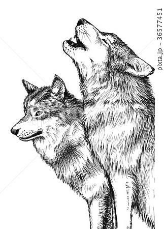 オオカミペン画のイラスト素材 36577451 Pixta