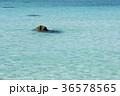 青い海 36578565