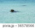 青い海 36578566