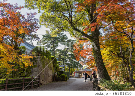 愛知 岡崎公園 紅葉の龍城神社 七五三参りに向かう親子連れ 36581810