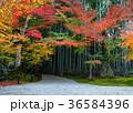 紅葉 竹林 風景の写真 36584396