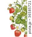 いちご イチゴ 苺のイラスト 36585721