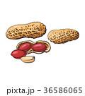ピーナッツ 落花生 白背景のイラスト 36586065