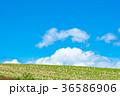 美瑛 北海道 畑の写真 36586906