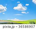 美瑛 北海道 畑の写真 36586907