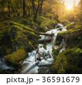 滝 水 森林の写真 36591679