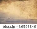 タンチョウ ツル 樹氷の写真 36596846