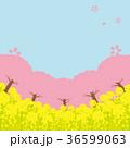 桜 菜の花 春のイラスト 36599063