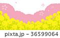桜と菜の花 背景イラスト 36599064