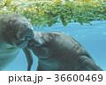 アクアリウム 水族園 水族館の写真 36600469