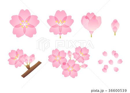 桜 36600539