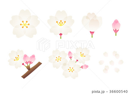 桜 36600540