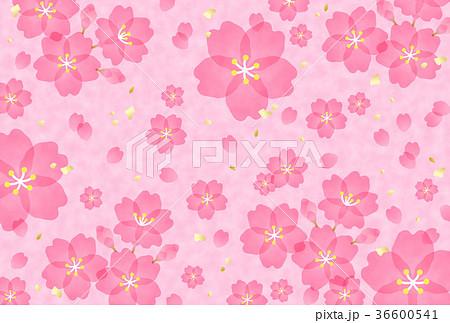 桜 36600541