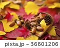 秋イメージ 36601206