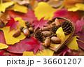 秋イメージ 36601207
