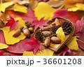 秋イメージ 36601208