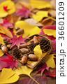 秋イメージ 36601209