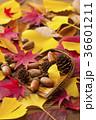 秋イメージ 36601211