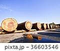 杉 丸太 木材の写真 36603546