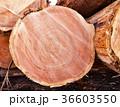 杉 丸太 木材の写真 36603550